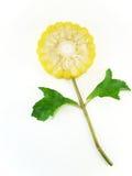 Idée de fleur de maïs d'isolement sur le fond blanc Photo stock