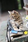Idée de mariage - inscription sur l'étiquette bleue et une chaussure avec le chaton Photographie stock