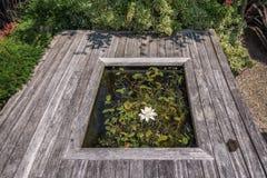 Idéer för trädgård Royaltyfria Foton