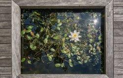 Idéer för trädgård Royaltyfri Bild