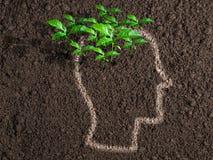 Idéer och begynnelse- begrepp Gröna sidor från mänsklig hjärna royaltyfria foton
