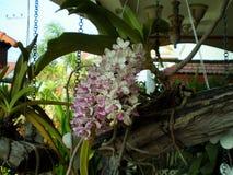 Idées de décoration de jardin Photo libre de droits