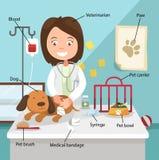 Idén av den kvinnliga veterinären som kurerar hunden Royaltyfria Foton