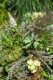 Idérik bukett av nya blommor med kryddor och örter Arkivbild