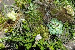 Idérik bukett av nya blommor med kryddor och örter Arkivfoto
