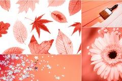 Idérik collage, i att bo korallfärg royaltyfri bild