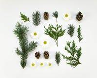 Idérik naturlig orientering av vinterväxtdelar på vit bakgrund Lekmanna- lägenhet, bästa sikt royaltyfria foton