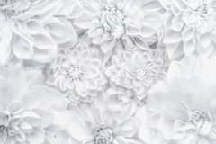 Idérik orientering för vita blommor, blom- modell eller bakgrund för hälsningkort av moderdagen, födelsedag, dag för valentin` s, fotografering för bildbyråer