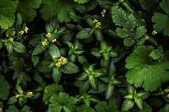 Idérik orientering som göras av gröna sidor fotografering för bildbyråer