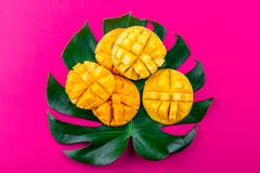 Idérik orientering som göras av mango för tropiska frukter för sommar och tropiska sidor på rosa bakgrund Lekmanna- lägenhet Trop Arkivbilder