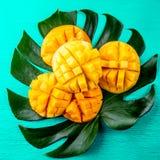 Idérik orientering som göras av mango för tropiska frukter för sommar och tropiska sidor på turkosbakgrund Lekmanna- lägenhet oli Royaltyfria Bilder