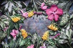 Idérik ram som göras av olika tropiska blommor och sidor på mörk lantlig bakgrund Royaltyfri Foto