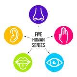 Idérik vektorillustrationlinje symbolsuppsättning av fem mänskliga avkänningar Vision utfrågning, lukt, handlag, smak som isolera stock illustrationer