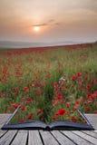Idérika begreppssidor av landskapet för bokvallmofält i sommar c Royaltyfri Fotografi