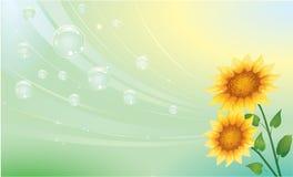 idérika solrosor för bakgrund Royaltyfri Fotografi