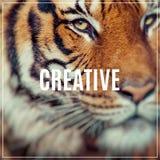 IDÉRIKT ord Närbild av en tigerframsida Selektivt fokusera Royaltyfria Bilder