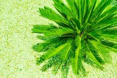 Id?rik tropisk palmbladordning som t?nds med ufo-klartecken Begrepp f?r parti f?r sommar?versvallande ber?mnatt id?rikt colors li arkivbilder