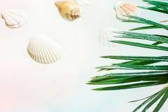 Id?rikt nautiskt sommarbegrepp H?rliga havsskal av olika former och den gr?na palmbladet f?r f?rger p? bl?a rosa f?rger f?r paste royaltyfri foto