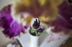 Id?rikt perspektiv av irisblomman i l?genhetinre royaltyfri bild