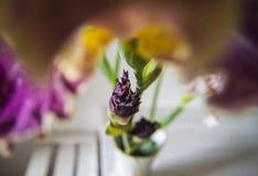 Id?rikt perspektiv av irisblomman i l?genhetinre arkivfoto