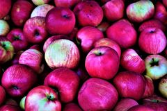 Ida Czerwoni jabłka przy rolnika rynkiem zdjęcia stock