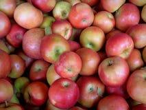 Ida Red-Äpfel lizenzfreies stockbild