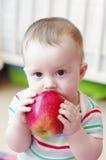 A idade do bebê de 7 meses come a maçã Fotos de Stock