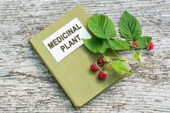 Idaeus de Rubus (framboise) et plante médicinale d'annuaire Photo stock