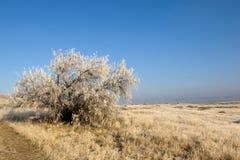 Idaho αγροτικό στοκ εικόνες