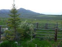 Idaho-Berg an der Dämmerung Stockfotografie