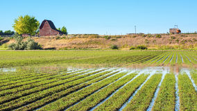 Idaho farm with rows of crops in a field Stock Photography