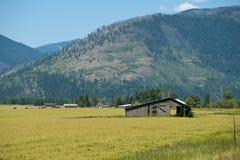 Idaho Farmland. Old barn in wheat field on Idaho Farm Royalty Free Stock Image