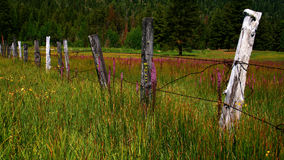 Idaho Fence. Rustic Idaho fence in spring with wild flowers Royalty Free Stock Image