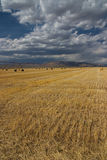 Idaho Harvest Stock Images