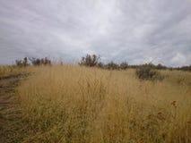 Idaho-Landschaft Lizenzfreies Stockbild