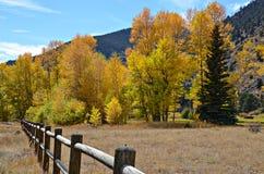 Idaho vårar, Colorado Arkivbilder
