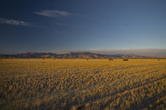 Idaho Wheat Fields Royalty Free Stock Photos