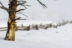 Idaho winter sceen with bid tree and wood fence Stock Photography