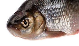 Ide fish Royalty Free Stock Image