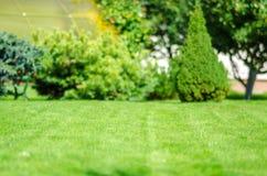 Ideału gazonu zielony podwórze i migdał zdjęcie stock