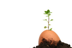 Idea is born from the egg #4 Royalty Free Stock Photography