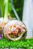 Idea casera de la decoración, una escena del jardín del terrario en una botella clara Fotografía de archivo