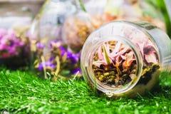Idea casera de la decoración, una escena del jardín del terrario en una botella clara Fotos de archivo
