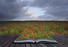 Idea creativa del concepto del paisaje del campo de la amapola fotos de archivo