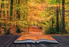 Idea creativa di concetto della foresta di caduta di autunno Immagine Stock