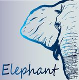 Beautiful blue gradient sketch of an elephant - close-up. Idea for creative zoological poster - detailed art sketch of a majestic blue elephant on a gray vector illustration