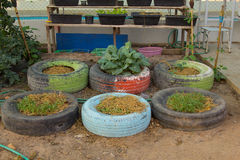 Idea de DIY de reciclar del neumático usado con las flores o la planta en caucho viejo imagen de archivo libre de regalías
