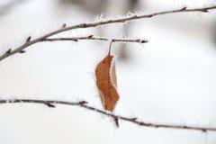 Idea de invierno, ramas en escarcha Imágenes de archivo libres de regalías