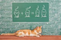 Idea de la educación con el gato rojo stock de ilustración