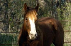 Idea del caballo Foto de archivo libre de regalías